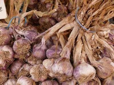 Garlic - can it go bad?