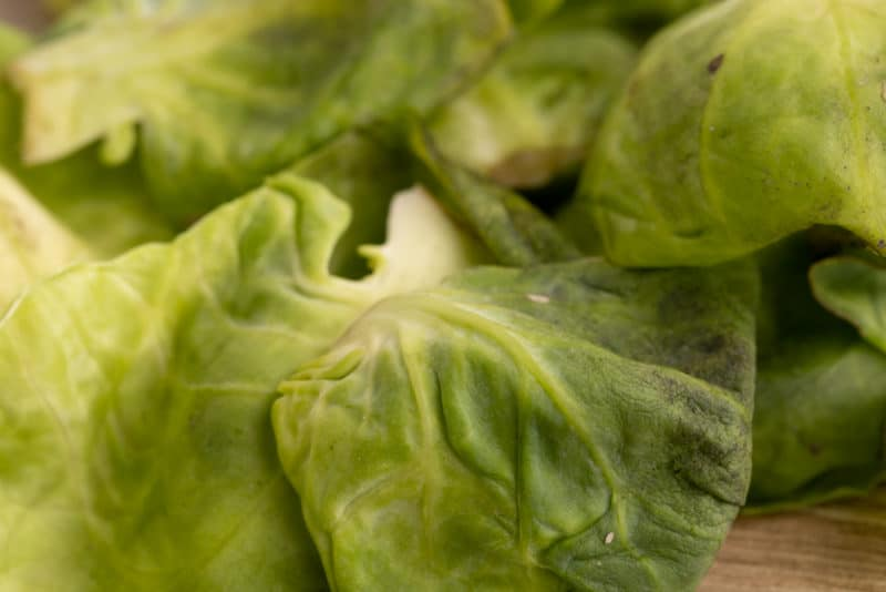 Brussels sprouts outer leaves