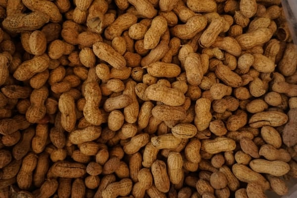 Bunch of unshelled peanuts