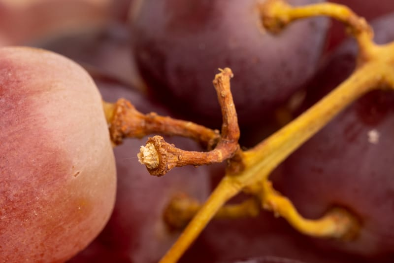 Grapes: brown and dry stems