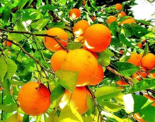 the green orange