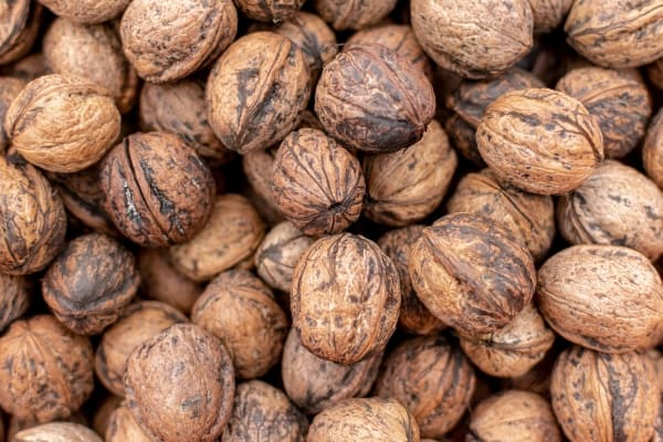 Pile of unshelled walnuts