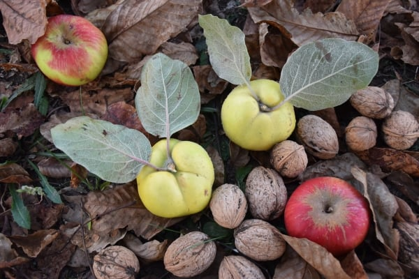 Walnuts and apples